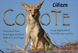 citizencoyote-by-janetkessler