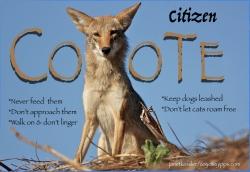 citizencoyote-by-janetkessler