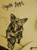 coyote_yipps1-1