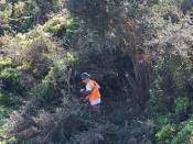 chain saws are used to cut down animal habitat because it is not native