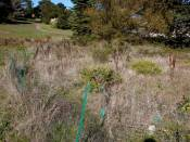 A native plant garden looks like this: fences and brown weeds