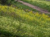 vast fields of clover are sprayed with poisonous pesticides -- fields our kids and dogs romp in