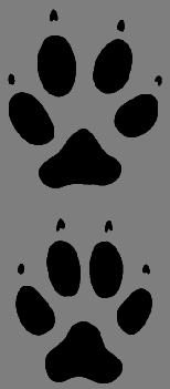 dog paw prints