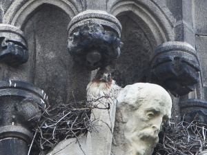 Saint John's nest rests on the shoulders of a suffering saint. Photo by rbs, Bloomingdale Village blog