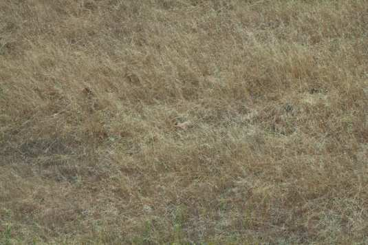 coyote is in the center of the photo in case you have trouble finding it