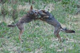 happier times: joyfully playing with sibling
