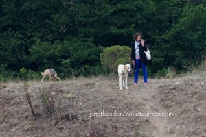suspicious coyote mother and a dog owner not being vigilant