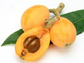 Loquat with seeds