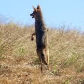 pogo-stick-style jumping