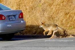 chasing a car