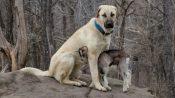 Anatolian-Shepherd-dog-minepuppy